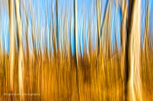 Trees_05hweb