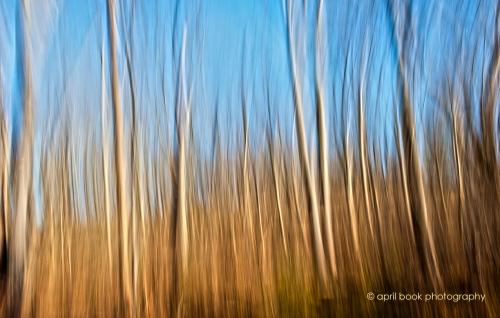 Trees_21web