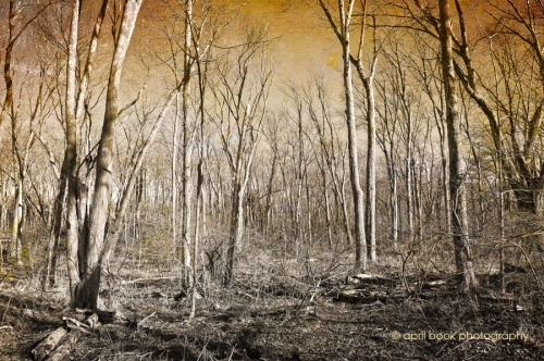 Trees_30web