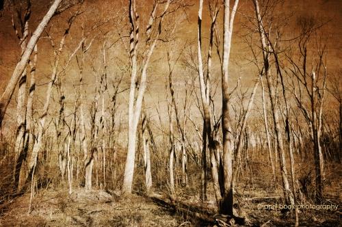 Trees_33web