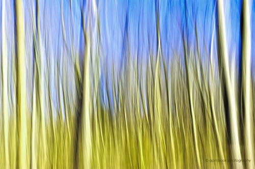 Trees_37web