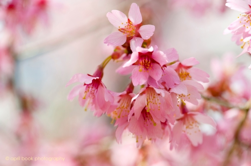 springflowers_001 web