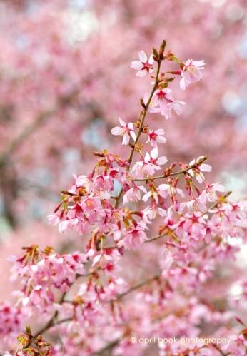 springflowers_002 web