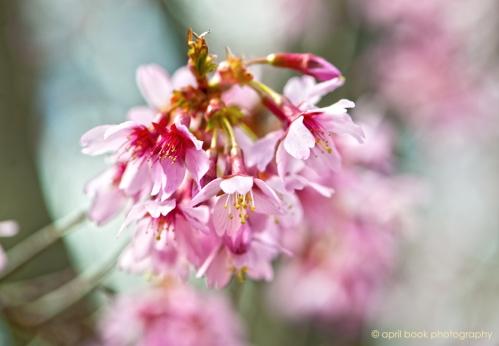 springflowers_003 web