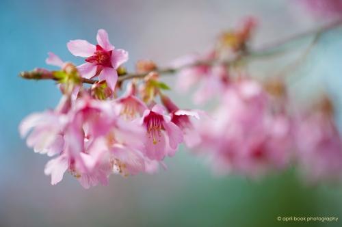 springflowers_006web