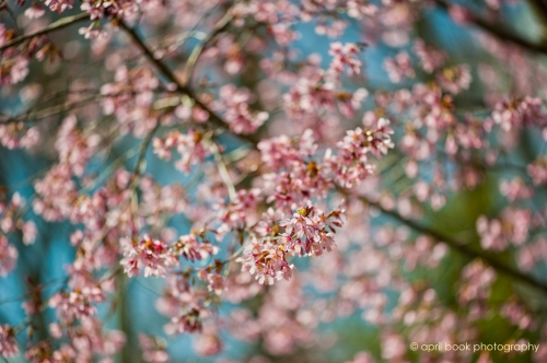 springflowers_012 web
