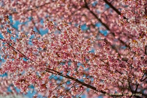springflowers_016 web