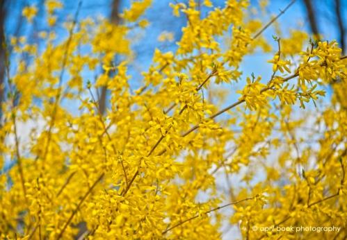 springflowers_026 web
