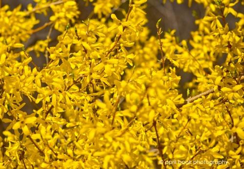 springflowers_048 web