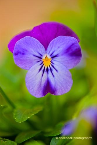 springflowers_056 web
