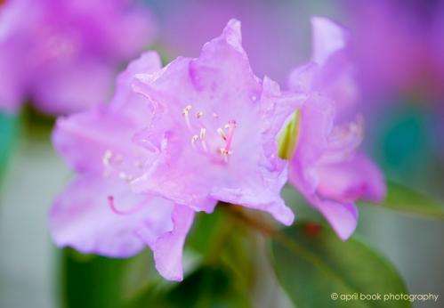 springblossoms_020 web