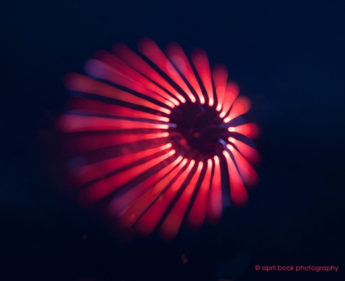 fireworks3 web