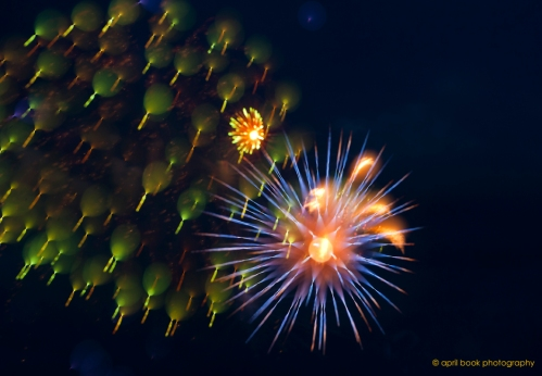 fireworks4 web