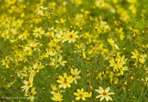 flower3 web