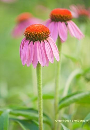 flowers2_017 web