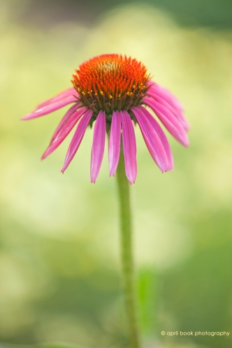 flowers2_022 web