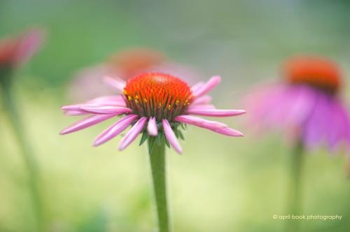 flowers2_024 web