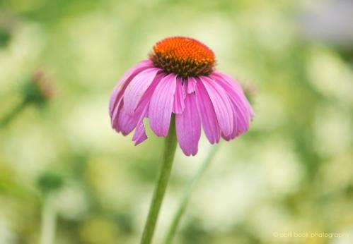 flowers2_032 web