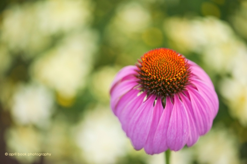 flowers2_045 web
