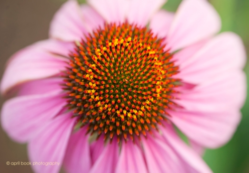 flowers2_058 web