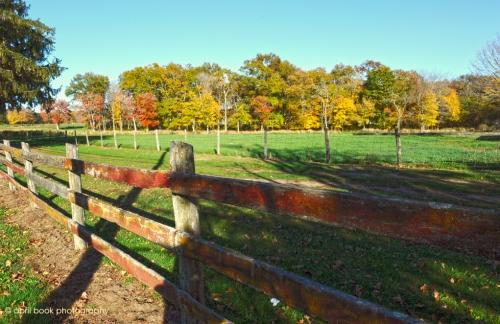 Fence5 web