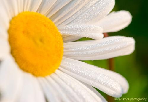 flowers_0001 web