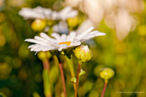 flowers_0031 web