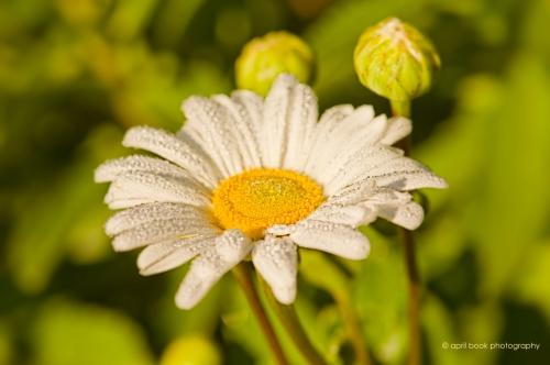 flowers_0054 web