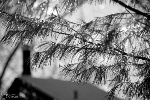 bw snow 1 web