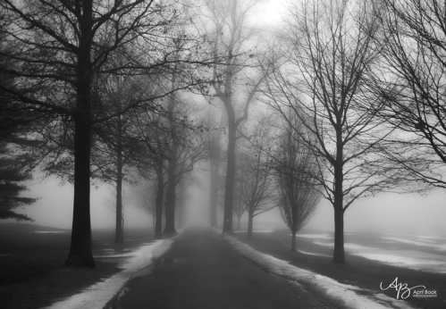 Fog2 web