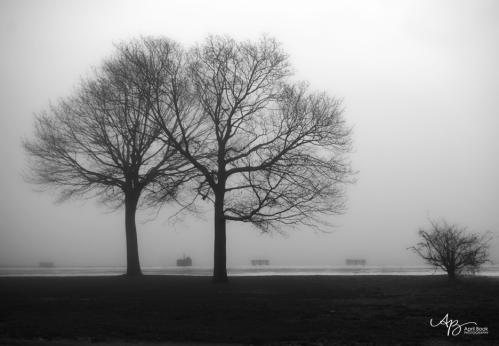 Fog3 web