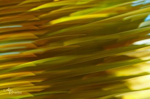 Palm leaf1