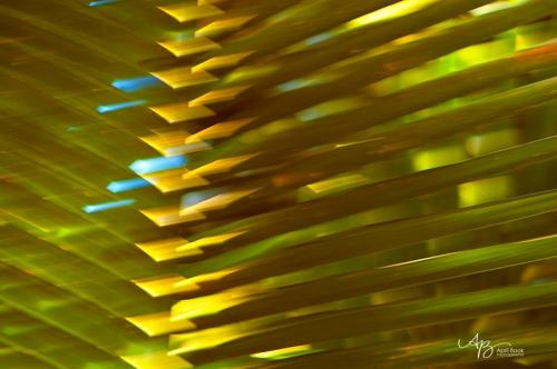 Palm leaf2