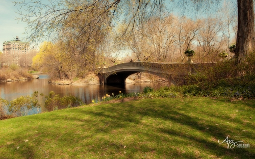 Central Park9 web