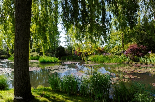 Giverny water04
