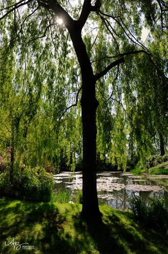 Giverny water05