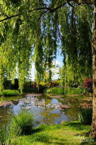 Giverny water07