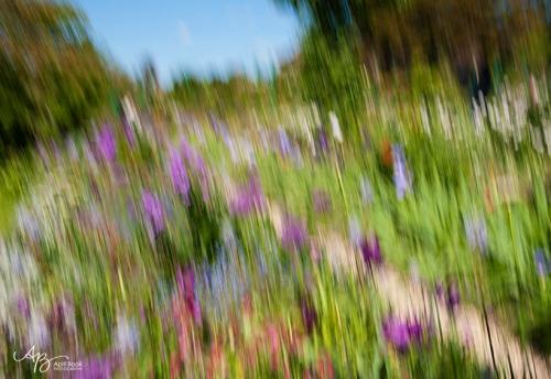 Monet gardens2 web