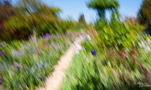 Monet gardens3 web