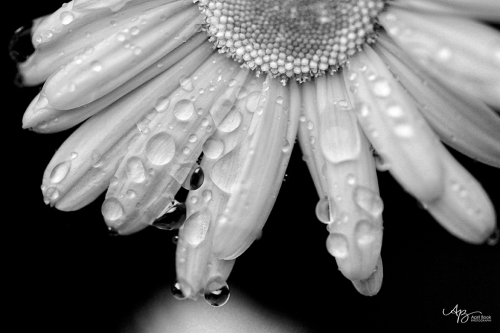 rain_0255 bw web