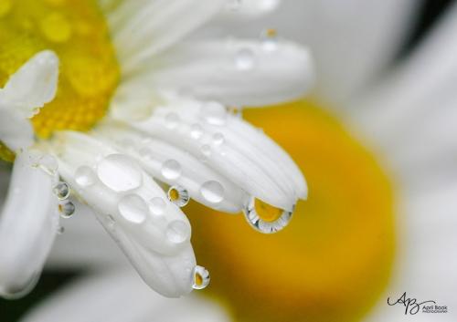 rain_0283 web
