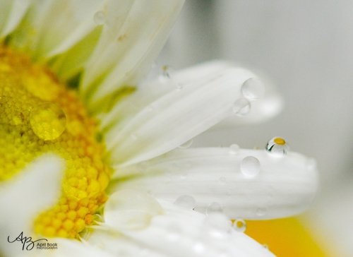 rain_0311 web