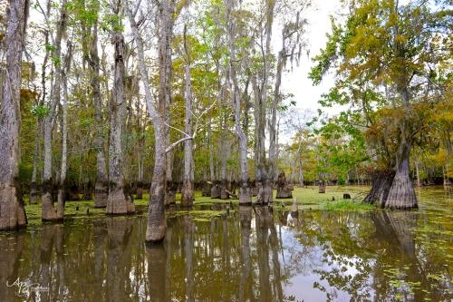 Swamp 024 web