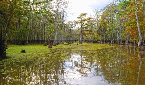 Swamp 025 web