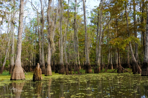 Swamp 027 web
