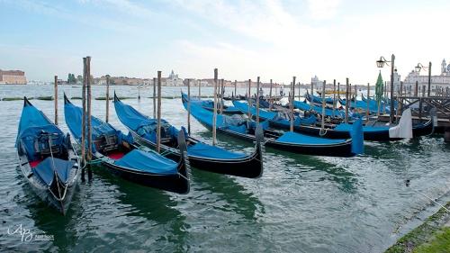 Venice web7